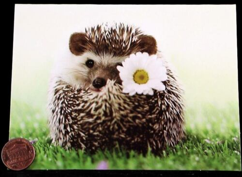 Adorable Cute Hedgehog Daisy White Flower Small Blank Greeting Note Card NEW