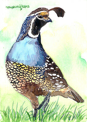 Gift for bird lovers Chickadee in summer wood ACEO Limited Edition Bird art