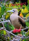 Tierparadies Galapagos (Posterbuch DIN A3 hoch) von Calvendo (2013, Taschenbuch)