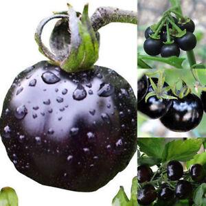 50stk-Schwarze-Tomaten-Tiefschwarz-Samen-Raritaet-Saemereien-Tomaten-Samen-Pflanze
