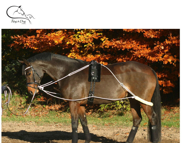Busse Training System/Aid/Pessoa Pony For Lunge Lunging Horse Pony System/Aid/Pessoa FREE DELIVERY cd0dcf