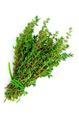 Thyme 1000 seeds Thymus vulgaris  Certified Organic herb ez grow CombSH E41
