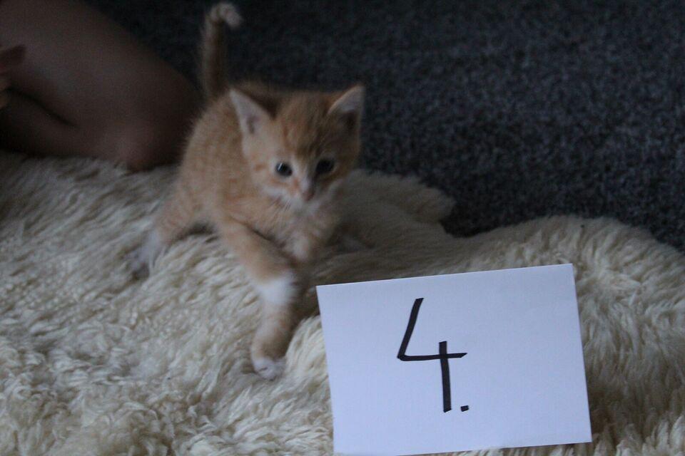 Flere killinger, Gårdkillinger, 12 uger