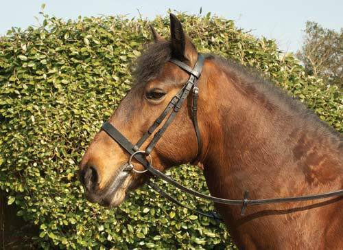 *NEW* Windsor Hunt Hunter Flat Plain Cavesson Bridle With Rubber Reins *NEW*