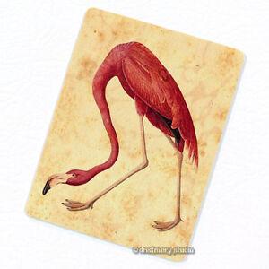 Fridge Décor John James Audubon Birds of America American Flamingo Deco Magnet