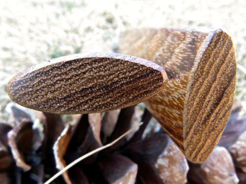 narrow Pea Patch Minstrel-style Teak Rhythm Bones
