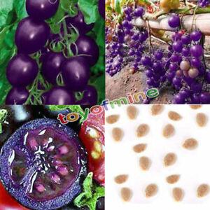 Hot-Garden-20-Samen-Lila-Kirschtomate-Bio-Heirloom-Obst-Gemuese-Pflanzen