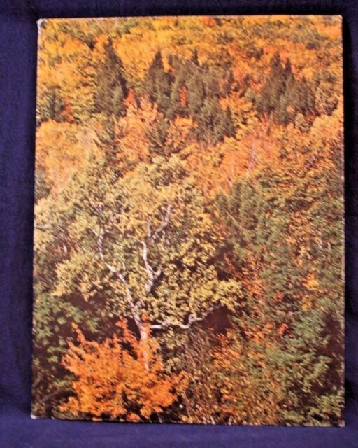 Vintage MEAD Fall Colors Tree's Scene Portfolio School Folder School 3-Ring
