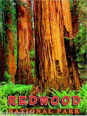 Redwood National Park California United States Travel Advertisement Art Poster