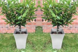 3,x Large GREY Milano Tall Planters Square Plastic Garden Flower Plant Pots