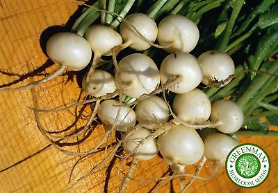 200 Graines de Radis blanc Icicle Graines légumes anciens Heirloom
