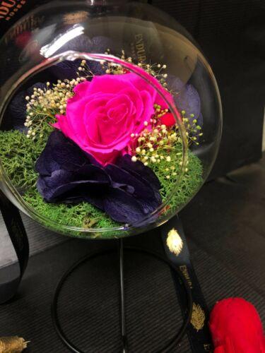 L/'alliance par Endura roses 100/% naturels préservés dernière jusqu/'à 3 ans