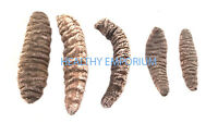Sea Cucumbers 100% Natural Sun Dried Mexicana Small Size A Grade (1 LB)