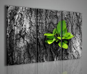 Gemaelde-Modern-Life-Bild-Blumen-Pflanzen-Natur-Einrichtung-Startseite-Buero
