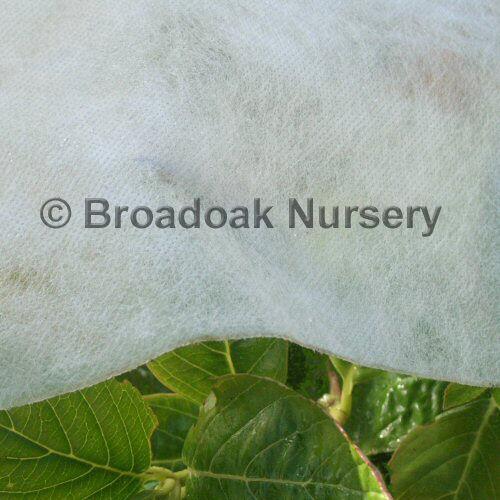 12m x 1.5m HORTICULTURAL FLEECE Garden Fleece, Frost Protection, Frost Fleece
