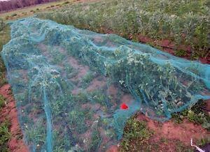Piante E Fiori Da Giardino.Rete Di Protezione Anti Uccelli 2 X 10 Metri Per Piante E Fiori Da