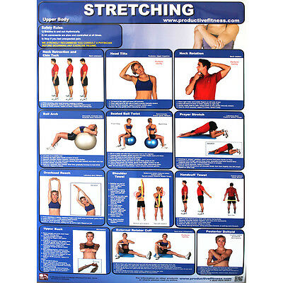 Productive Fitness Posters Stretching Exercise (Upper & Lower Body) for Home Use