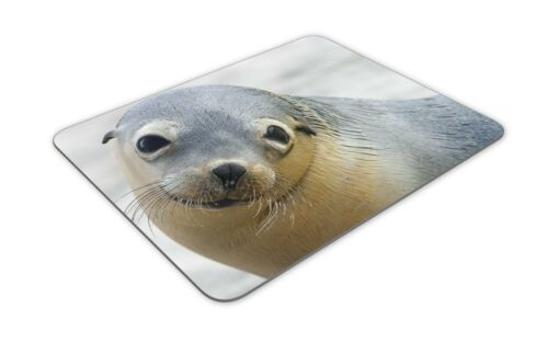 Sea Creature Fun Art Gift #16916 Adorable Sea Lion Cute Animal Mouse Mat Pad