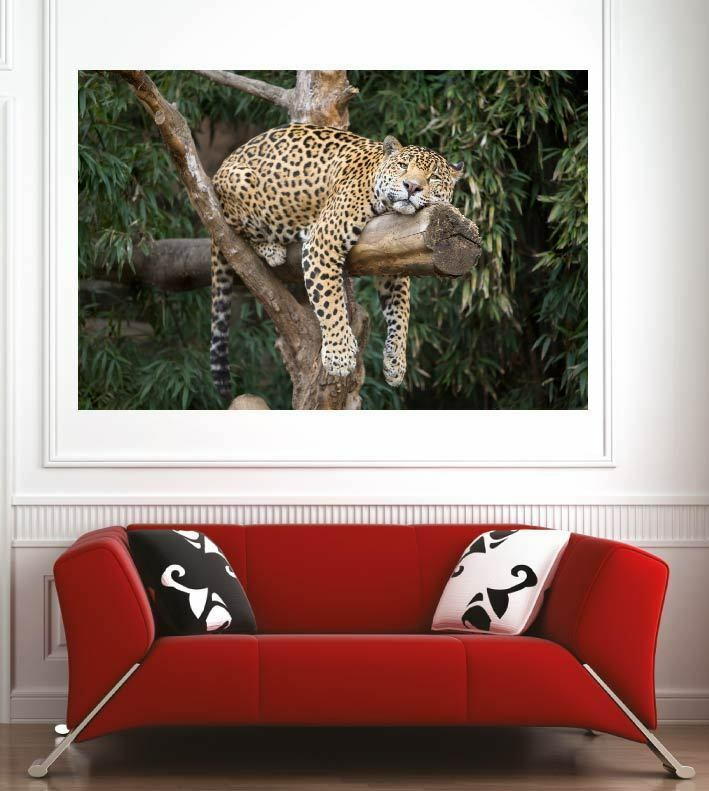 Plakat Plakat Wanddekor Leopard Ref 9724333 (6 Größe)