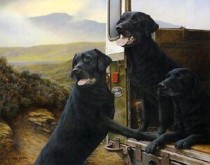 Nigel-Hemming-WILD-ROVERS-Black-Labrador-Dogs-Pets-print-Christmas-gift-4