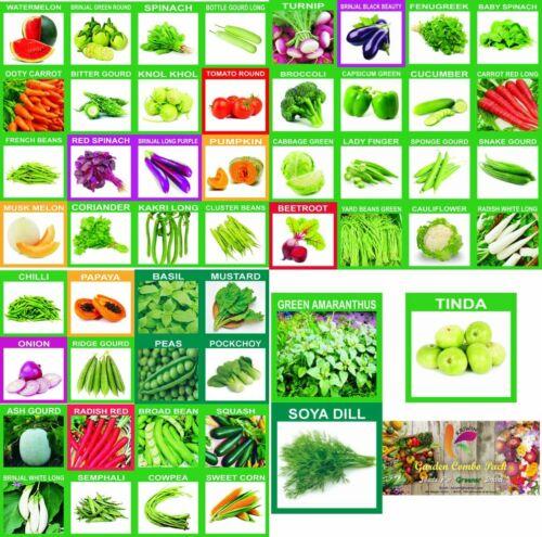 Organic,Hybrid KRIWIN 51 Varieties 2215 Fruits /& Vegetables Seed seeds