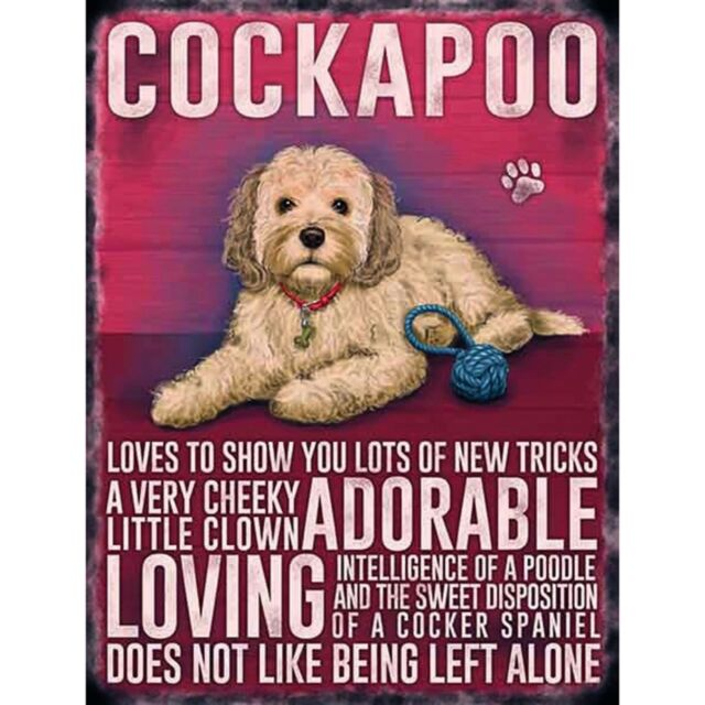 BLACK COCKAPOO VINTAGE RETRO 20 CM STYLE METAL HANGING DOG SIGN BREED CHARACTER
