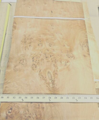 """Maple Burl Cluster wood veneer 16/"""" x 26/"""" raw no backing 1//42/"""" thickness /""""A/"""""""