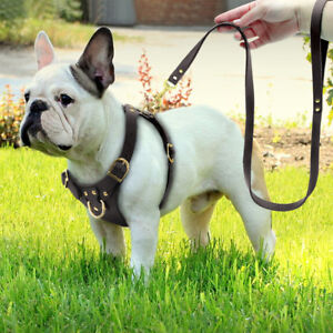 Safety-Front-Leading-Leather-Dog-Harness-and-Leash-Set-with-Gold-Snap-Brown