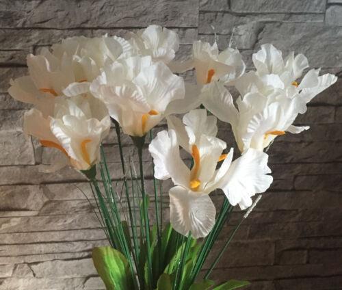 1 x  Iris weiß//creme  53 cm  Schwertlilie