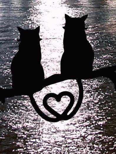 Amante dei gatti felini San Valentino Wall Art Print Print Print Canvas SCENIC Art regalo di San Francisco fcacdd