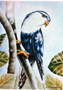 Raisonnable Yt 157 Vini Peruviana Oiseaux Tahiti PolynÉsie FranÇaise Fdc 1° Jour