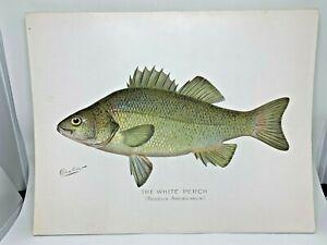 Original-Antique-Denton-Fish-Print-White-Perch