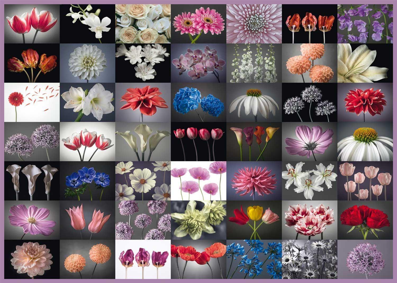 Schmidt Fleur Collage Puzzle (2000 Pièces)