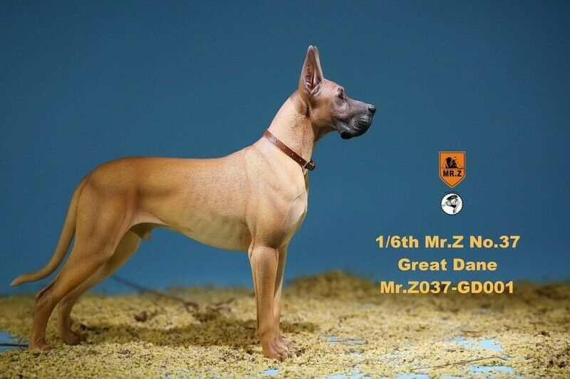 Mr.Z 1 6 Animal Model MRZ037 GD001 The German Great Dane Dog  Model Toy
