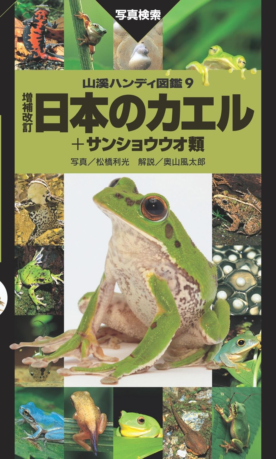 Frösche und salamander in japan illustrierte lexikon buch