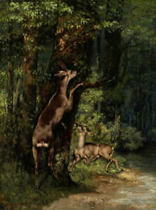 Gustave-Courbet-Deer-Giclee-Art-Paper-Print-Paintings-Poster-Reproduction