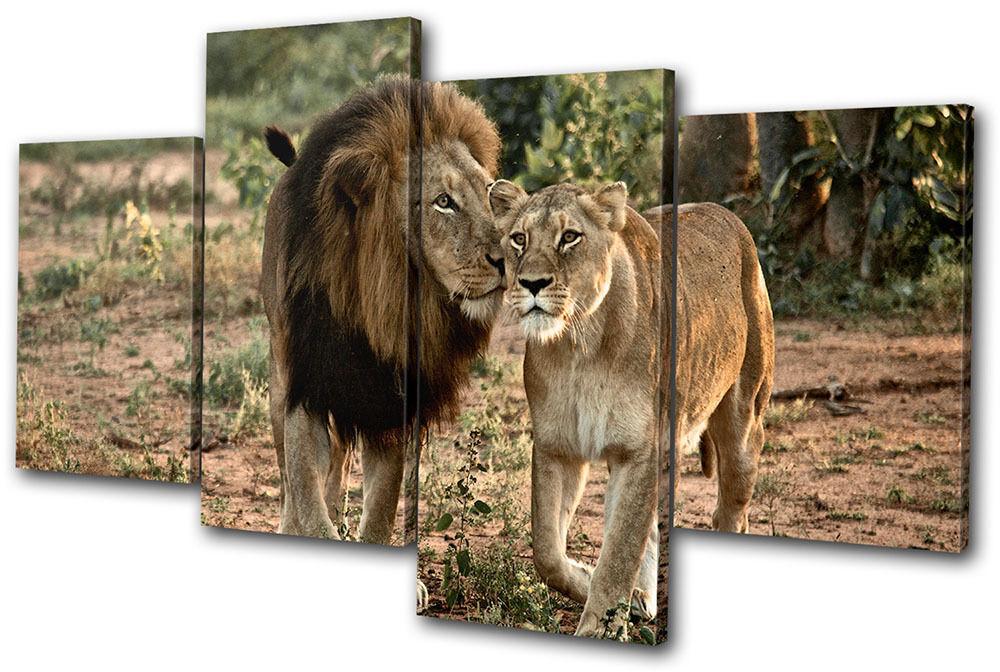 Animals lions lions lions South Africa  MULTI TELA parete arte foto stampa 19a217