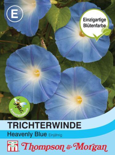Pharbitis purpurea Trichterwinde /'Heavenly Blue/' 50 Samen 1708 ca