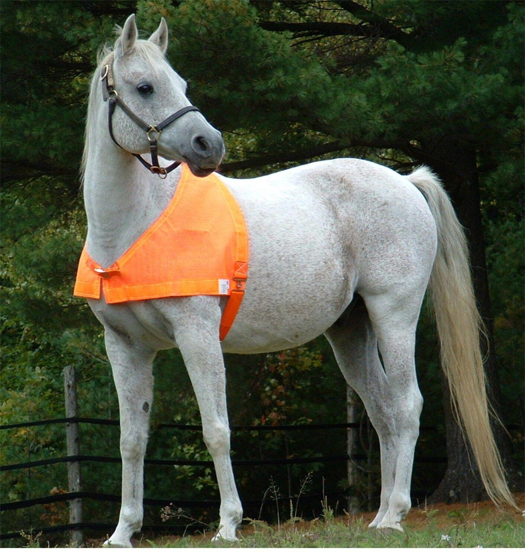 PredECTAVEST HIGH VISIBILITY BLAZE orange HORSE VEST SIZE PONY or LG MINI