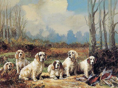 CLUMBER SPANIEL CHARMING DOG GREETINGS NOTE CARD LOVELY DOG IN SCENIC SETTING