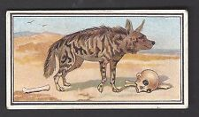 HILL - ANIMAL SERIES (CROWFOOT CIGARETTES) - #16 THE STRIPED HYENA