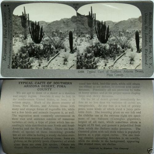 Keystone Stereoview of DESERT CACTI ARIZONA From 600//1200 Card Set Pima County