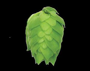 Maltmaster Cascade 300g Leaf Hops