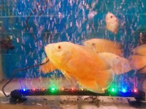 Aquarium Fish Tank- MultiColor LED LIGHT with  AIR STONE  - RS-A46 -Length 15""
