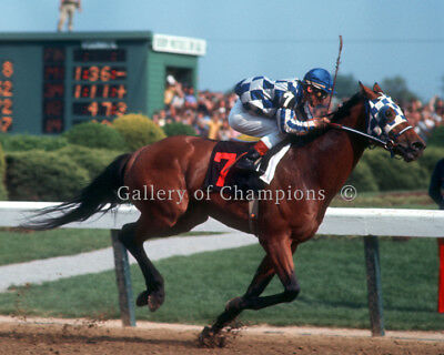 "Secretariat 1973 Belmont Stakes Paddock Photo 8/"" x 10-24/"" x 30/"""