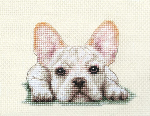 WHITE FRENCH BULLDOG dog puppy ~Full counted cross stitch kit all materials