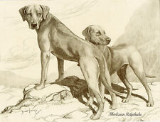 RHODESIAN RIDGEBACK CHARMING DOG GREETINGS NOTE CARD TWO BEAUTIFUL STANDING DOGS
