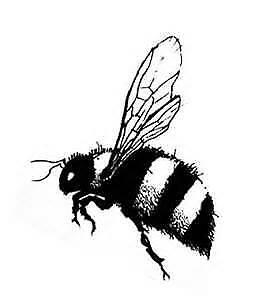 The Buzz Wear