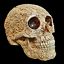 thumbnail 1 - Unique-Engraved-Floral-Realistic-Life-Size-HUMAN-SKULL-Resin-Model-Decorated-Art