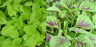 Yin Cho or Callaloo SEEDS //Garden USA 红心苋菜 Chinese Spinach 100 Red Amaranth